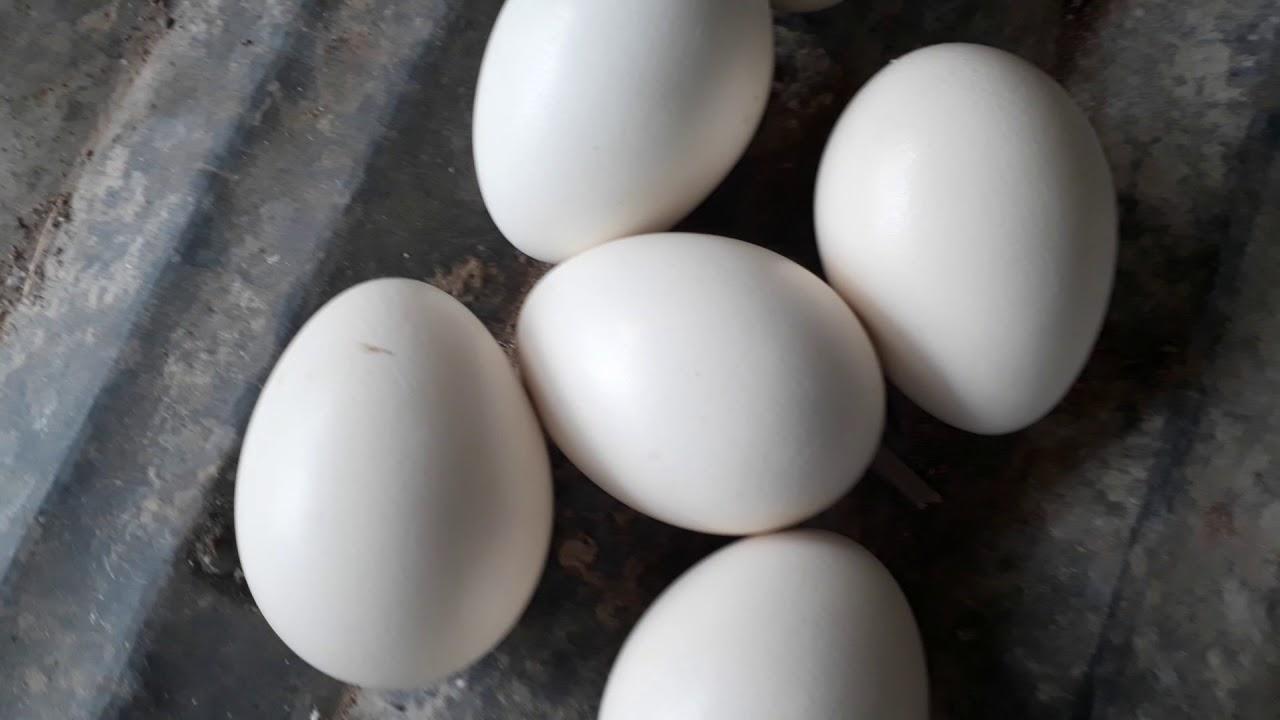 bảo quản trứng vịt