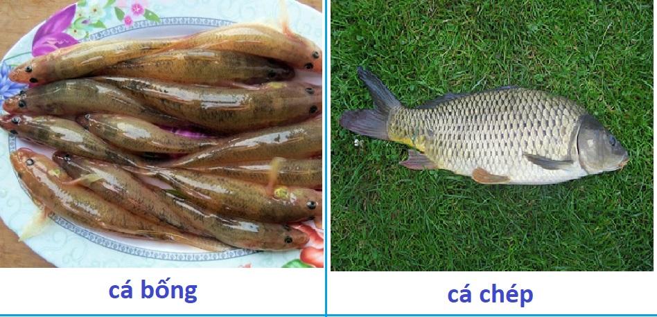 Cá bé và cá to
