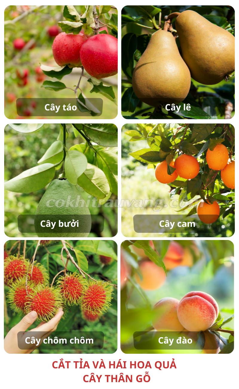 thu hoạch trái